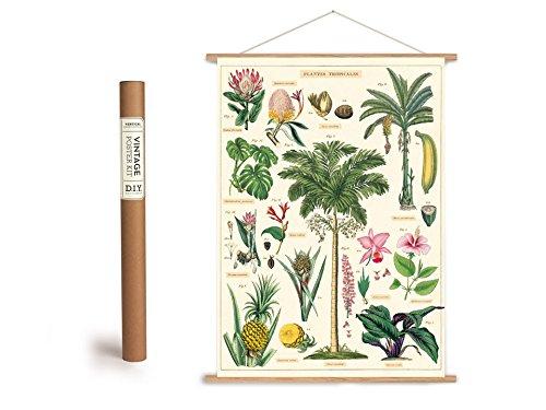 Vintage Poster Set mit Holzleisten (Rahmen) und Schnur zum Aufhängen, Motiv tropische Pflanzen, Regenwald