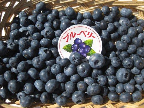 長野県産 生産農家直送 生ブルーベリー(生食or加工向き) 約1kg入り/箱