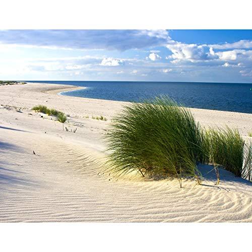 Fototapete Strand und Meer 352 x 250 cm Vlies Tapeten Wandtapete XXL Moderne Wanddeko Wohnzimmer Schlafzimmer Büro Flur Beige Blau Grün 9008011c