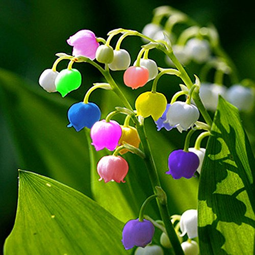50 pcs/sac Muguet Graines de fleurs rares Indoor de Bell Orchidée arôme riche Bonsai plantes en pot Balcon bricolage jardin vert