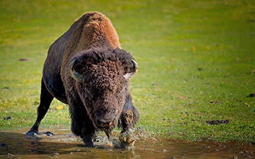 Lsping Puzzle 500 pezzi bisontes artiodáctilos Animales 52x38cm