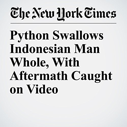 Python Swallows Indonesian Man Whole, With Aftermath Caught on Video copertina