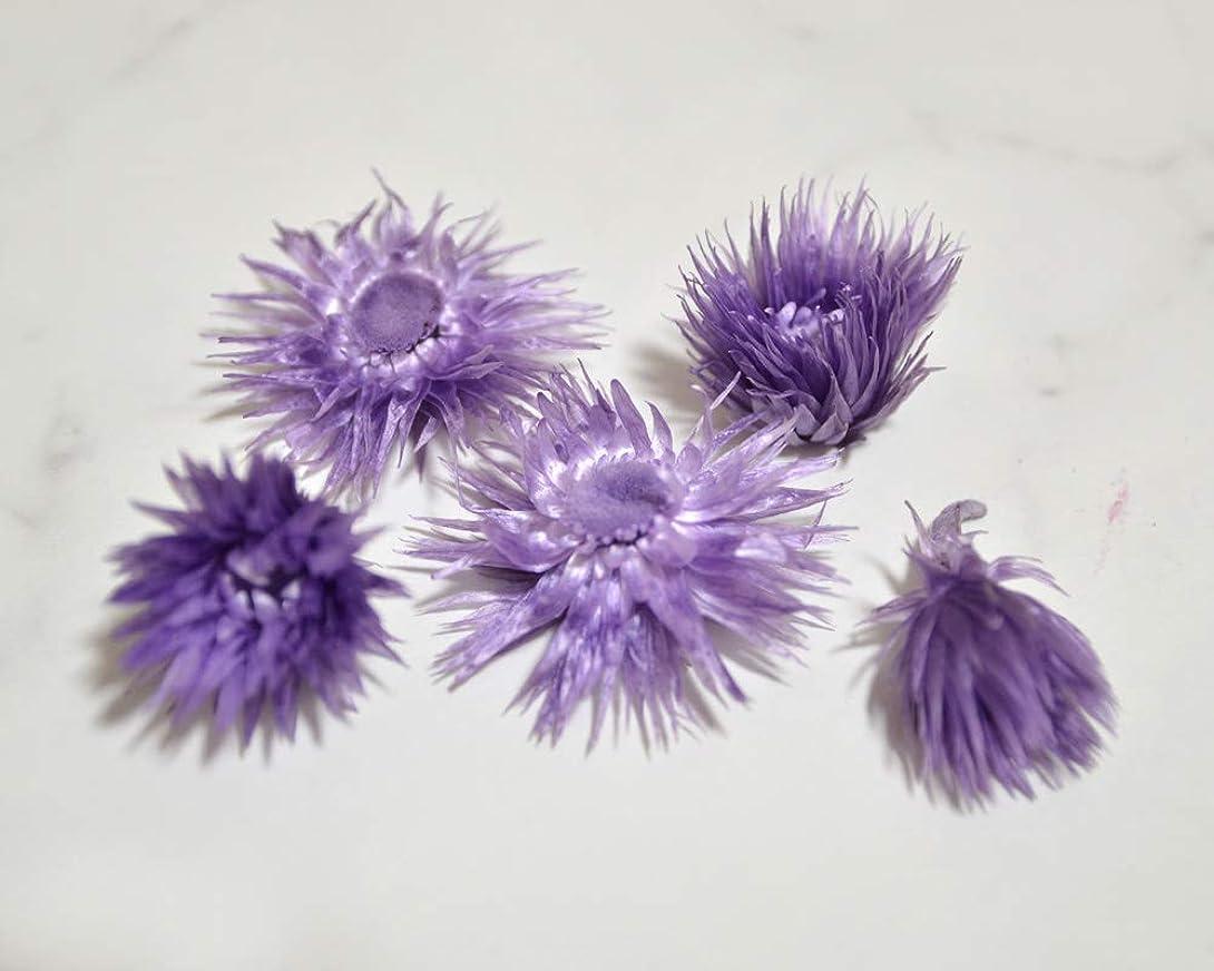 間接的家主アナリストシルバーデージー ヘッド 5個入り ドライフラワー ハーバリウム 花材 小花 アレンジ 少量 パック 小分け (パープル)