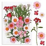 VINFUTUR 35pcs Flores Secas Naturales Prensadas Ramos Secos Pequeñas Surtidas Plantas para Decoración Tarjetas �lbum Recorte Scrapbooking Manualidad DIY