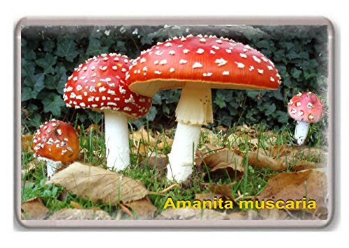 Mushrooms/Amanita muscaria/fridge/magnet...!!! - Calamita da frigo