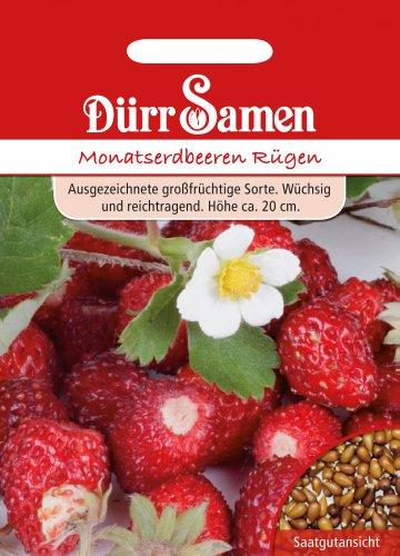 Dürr Samen 0565 Monatserdbeere Rügen (Monatserdbeerensamen)