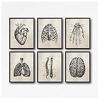 DLFALG 人体解剖学肺脳心臓病院クリニック学校壁アート写真プリントキャンバス絵画リビングルーム医療装飾-30x40cmx6フレームなし