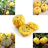 10 Unids Mini Calabaza Pequeñas Semillas De Melón Naranja Jardín Bonsai Planta Decorativa Para El Hogar