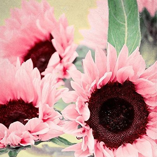 Yukio Samenhhaus - 50 Stück Raritäten Sonnenblumen Saatgut Farbenpracht Blumenmeer Hohe Riesen bienenfreundlich, ideal für Zaun, Mauer, Beet