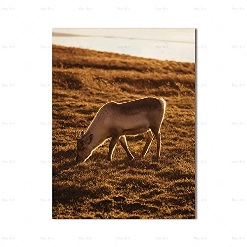 N / A Canvas oil painting Nordic style deer horse poster mural animal picture for living room home frameless decorative painting Z17 60x90cm