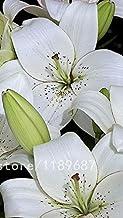 100pcs / bolsa de semillas del lirio raras, no bulbos de lirio, que es la semilla, semillas de flores de lirio de los bonsai, fragancia agradable, planta para el hogar y el jardín