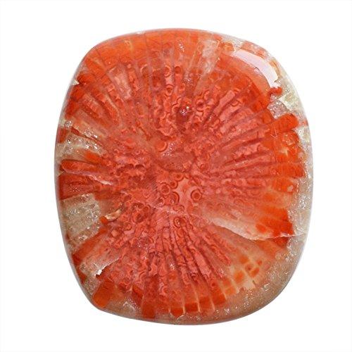 Naturale Utah Corno Rosso Cabochon Corallo, Dimensione 23x20x3.5 MM, Designer Gemstone, Red Fossil Corallo, AG-10059