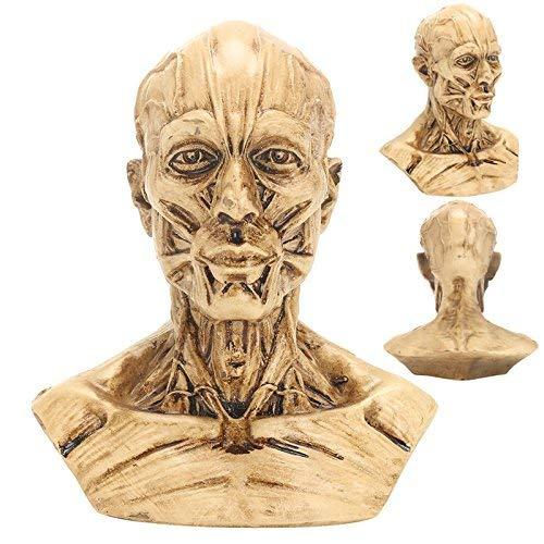 Udane Haushaltswaren Zubehör Menschlicher Kopf Muskel Skulptur Anatomie Modell Menschliche Muskel Anatomie Lernwerkzeug