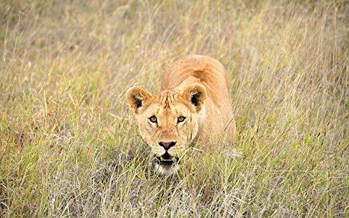 Lsping Puzzle 500 pezzi adulti per animali grandi 3D Animales León Grandes felinos Leona Hierba 52x38cm