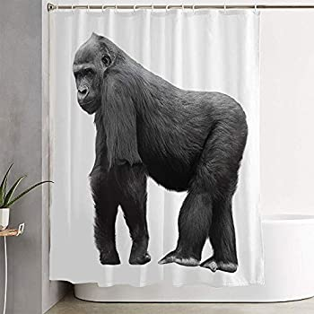 Avnaalvl Fabric Bathroom Curtain Sets Silverback Monkey Gorilla Standing On Lookout Isolated Studio Hairy Face Animals Strong Wildlife Shower Curtain Bath Curtains with Hooks 72  W x 72  H