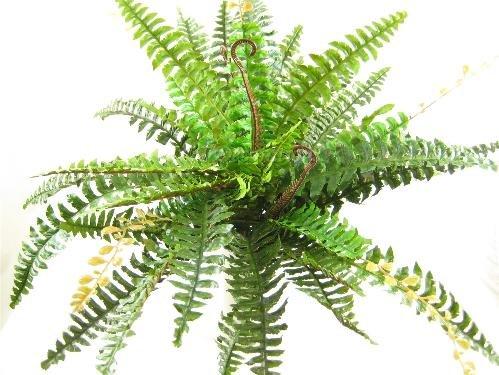 GT Decorations - 80cm verde grande seda artificial boston planta de helecho de