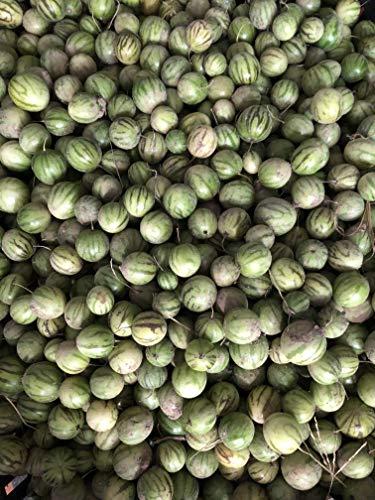 Mini Pepino, Tzimbalo, Solanum caripense, Birnen Melone, exotische Früchte, 20 Samen, von unserer ungarischen Farm samenfest, nur natürliche Dünger, KEINE Pesztizide, BIO hu-öko-01