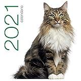 Gatti. Calendario da muro 2021
