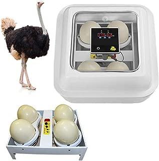Mumoo Bear 4 Pieces capacity ostrich Twin Cocks egg incubator: