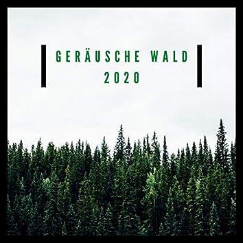 Geräusche Wald 2020