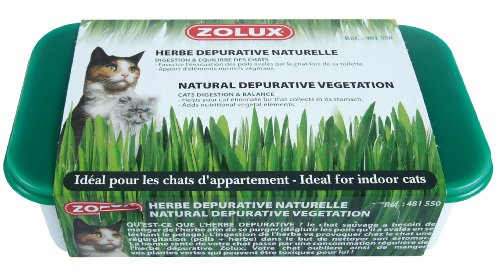 Zolux - Hierba para gatos purgante natural para plantar