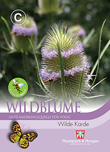 Thompson & Morgan AGT09037 Wildblume Wilde Karde (Wildblumensamen)