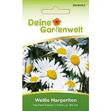 Weiße Margerite Mayfield Riesen | Margeritensamen | Saatgut für Sommerwiesen