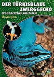 Der Türkisblaue Zwerggecko: Lygodactylus williamsi (Art für Art:...