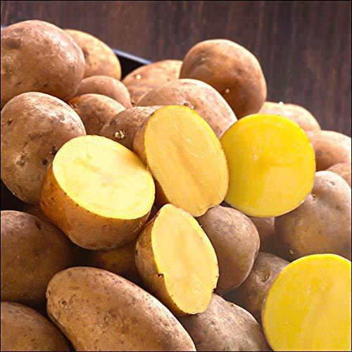 北海道産 新じゃが じゃがいも インカのめざめ 10kg(共撰/M-LMサイズ/約74-136個入) ジャガイモ 馬鈴薯 野菜 北海道 お取り寄せ