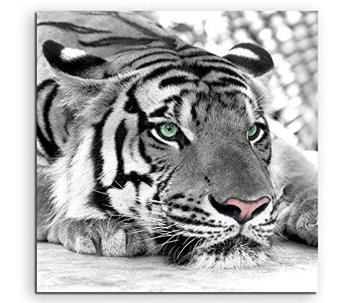 Sinus Art Wandbild quadratisch 60x60cm Künstlerische Fotografie – Weißer Tiger mit grünen Augen