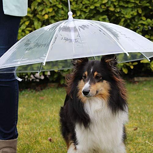 Ombrello per cani che sostituisce l'impermeabile Pet Umbrella