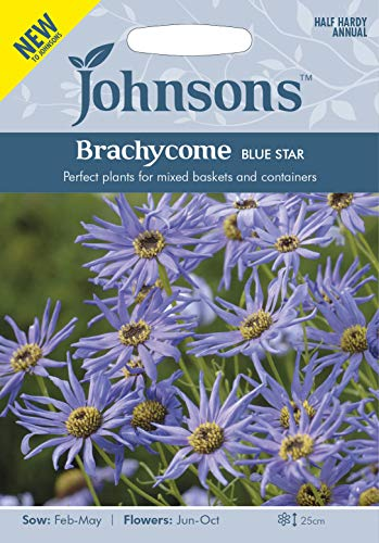 Johnsons Seeds BRACHYCOME Blue Star Graines - 1