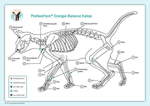 Akupunktur-Tafel Katze: PraNeoHom® Energiebalance durch Heilen mit Zeichen