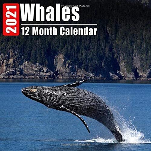 Calendar 2021 Whales Cute Whale Photos Monthly Mini Calendar With Inspirational Quotes each product image