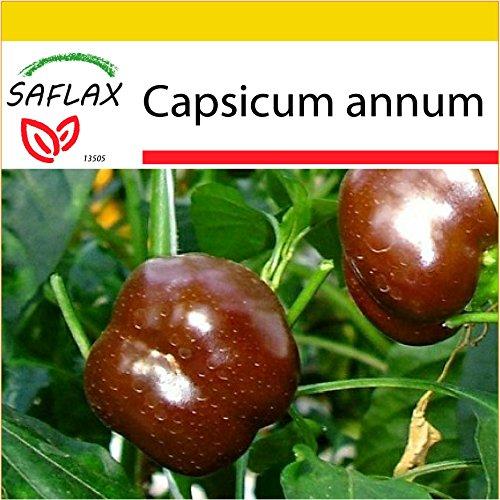 SAFLAX - Kit de culture - Paprika - Sweet Chocolate X - 10 graines - Capsicum annum