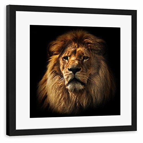 artboxONE Poster mit Rahmen schwarz 40x40 cm Lion Portrait with Rich Mane on Black von Michal Bednarek