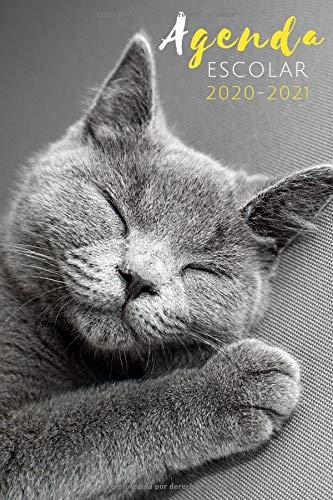 agenda escolar 2020-2021: agenda gatos 2020 2021, agenda...