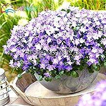 Vista 100pcs / Sac Rare Campanula Graines Campanula Chili Rosea Pots De Fleurs Bellflower Evergreen Plante Pour La Maison Jardin 2016 Chaud Bonsaï