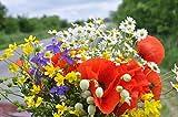 Semillas de flores silvestres, Prado Mix, sólo las flores - 10 g-granel, Ganga