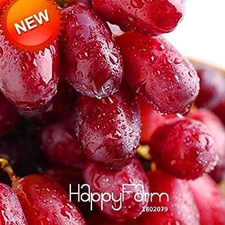 Syrah Grape Kyoho Grapes Plant Promotion!100 PCS/Bag Sweet Red Grape Bonsai Advanced Fruit Seed Natural Growth Grape Delicious Gardening Fruit Plants,#3XDYDY