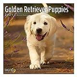 2021 Golden Retriever Puppies Wall Calendar by Bright Day, 12 x 12 Inch, Cute Dog