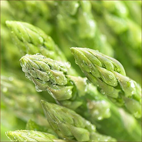北海道産 グリーンアスパラ 6kg (2Lサイズ) 旬 新鮮 野菜 アスパラ アスパラガス 北海道 お取り寄せ