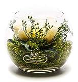 Rosen-Te-Amo Langlebiger Blumenstrauß aus 3 konservierten, weißen Blumen in der Vase; Infinity Rosen im Glas: schön handgefertigt aus 100% echtes Bindegrün - 3 Jahre haltbar ohne Wasser