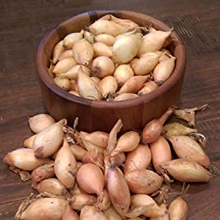 Onion Sets ,Yellow (40-70 bulbs) Garden Vegetable