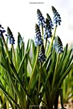 Muscari - Lined Notebook with Margins: 101 Pages, Medium Ruled, 6 x 9 Journal, Soft Cover