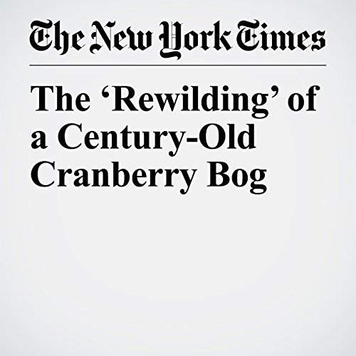 The 'Rewilding' of a Century-Old Cranberry Bog copertina