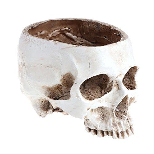 CADANIA Tête De Crâne Humain Conception Pot De Fleur Planteur Conteneur Artisanat Ornements Décor À La Maison