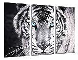 Ref.26618 Impression sur bois XXL Motif yeux bleus et animaux Noir/blanc 97 x 62 cm