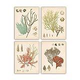 Jwqing Wandkunst Poster druckt Meerespflanzen und Muschelbilder Moderne minimalistische Leinwand Algenmalerei für Wohnzimmer Home Decor (40x40cmx4 No Frame)