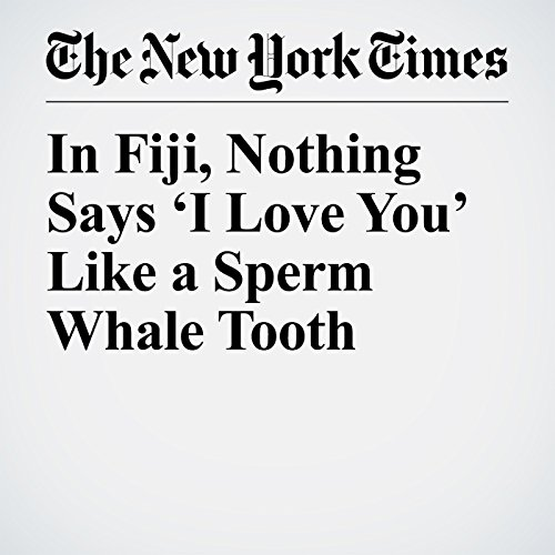 In Fiji, Nothing Says 'I Love You' Like a Sperm Whale Tooth copertina